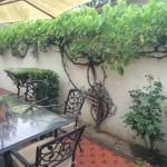 The outdoor dining patio, with lovely grape vine