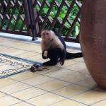 Monkey on the balcony.