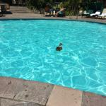 The pool ducks