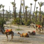 Marrakech Private Visits - Day Tours Marrakech