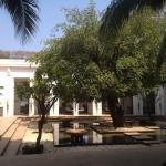 Central courtyard with the beautiful banyan tree.
