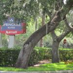 Foto van SpringHill Suites by Marriott/ Sarasota Bradenton