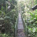 Suspension bridge to the primary forest on the hotel property.