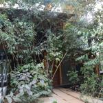 Our Jangle & Cabin Machans enveloped by trees