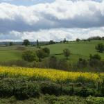 View from Steppes Farm