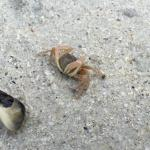 Many small creatures on the beach