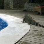 Visitor by the pool