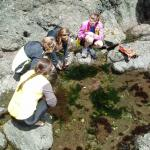 Tide Pools everywhere, Incredible little ecosystems!