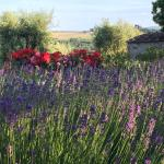 Lavender and flowers abound