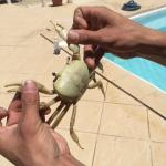 Friendly Crabs