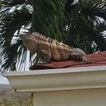 The guardian of our building, we called him Godzilla