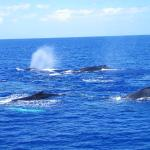 Whale Watch from Ma'alaea at Pacific Whale Foundation March 29, 2015.