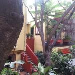 Foto The Red Tree House