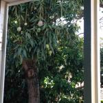 View of the Mango tree from the bed, very relaxing and fragrant x