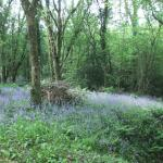 Bluebell Wood - one of many walks in the Country
