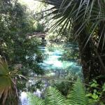 Foto van Juniper Springs Recreation Area