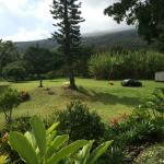 The view from the room - the grounds