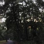 Foto van Fort McAllister State Historic Park Campground