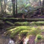 Tarkine Wilderness Lodge照片