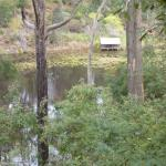 The view of the billabong from the Treehouse Cabin