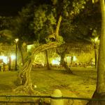 At night the Gnarled Trees just inside the walls of the Old Town