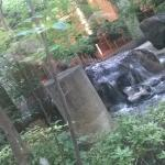 Beautiful Japanese Water Garden outside Restaurant Window