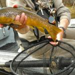 True North Trout Guide Service