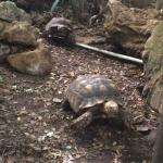 tortoise in the Gardens