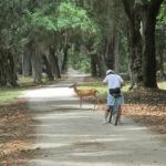 Traffic jam on Cumberland Island
