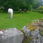 Horses in the orchard