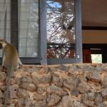 monkeys will come in if you leave windows open