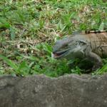 Caught this Iguana enjoying herself. There are lots to view and enjoy.