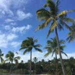 Beautiful palms in the area