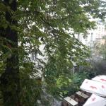 greenery outside my window