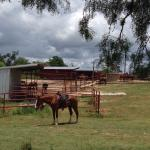 Foto Mayan Dude Ranch