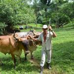 A little help in converting the sugar cane into delicious treats
