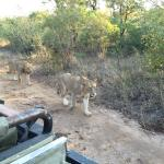 Foto di Waterbuck Game Lodge