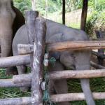 Photo de Maesa Elephant Camp