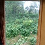 forest view window