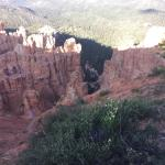 Bryce Canyon Pines照片