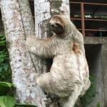 Sloth hanging out at the hotel