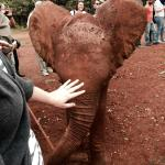 You get to touch the elephants!