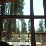 back of cabin overlooked the woods; floor to ceiling windows