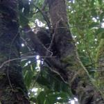 baby porcupine in the crook of the tree