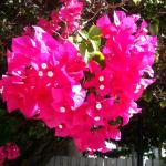 Even the plants have heart!! The colorful flowering bougainvillea's added even more spice to the
