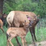 Mom and baby on the inn road