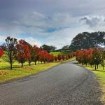 Photo de The Sebel Kirkton Park Hunter Valley