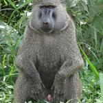 Gorilla Tour Booking Safaris - Day Tours