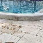 Bird Droppings all Over Pool Deck