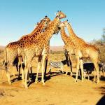 Photo de Inverdoorn Game Reserve